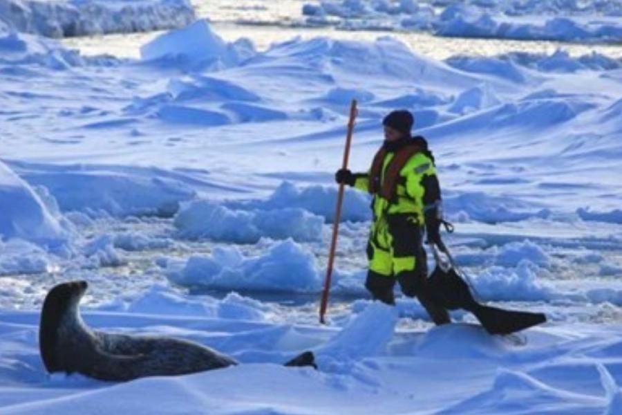 帝企鹅的奥德赛之——南极冰盖上的征程