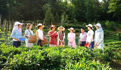 7月14日―品和茶道学校暑期亲子制茶培训班开始招生啦!