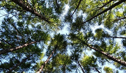 自然教育营哈佛女孩邀您一起到小兴安岭避暑