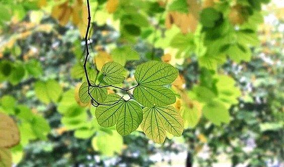 朗读者|落怀,在秋的眉间